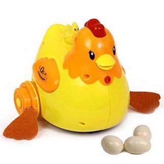 Egg laying chicken